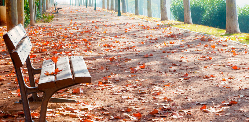 Why urban areas continue to need parks