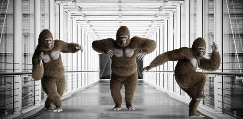 gorillas-hallway